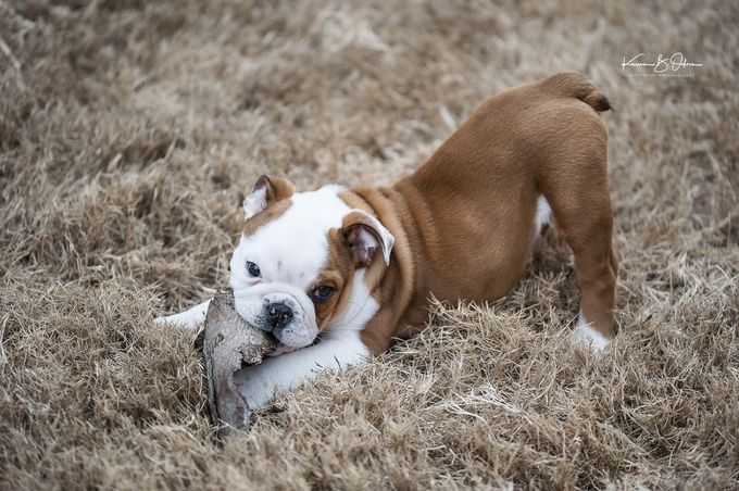 TH20170114_043-1 by Onthewildsidephotography - Kittens vs Puppies Photo Contest