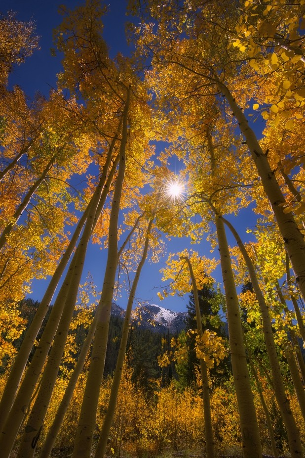 Golden Canopy by GayleLucci - Flares 101 Photo Contest