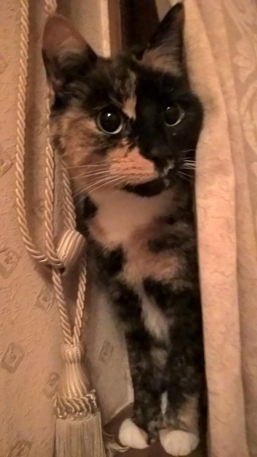 Heid-cat