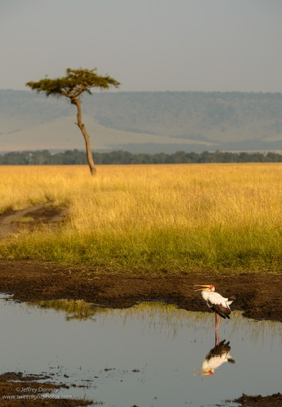 African Stork Reflection