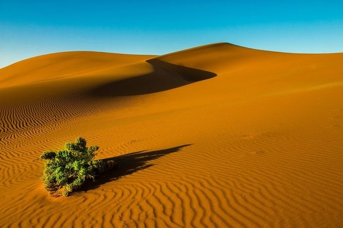 The lone bush by Darrenp - Stillness Photo Contest