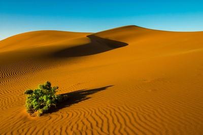 The lone bush