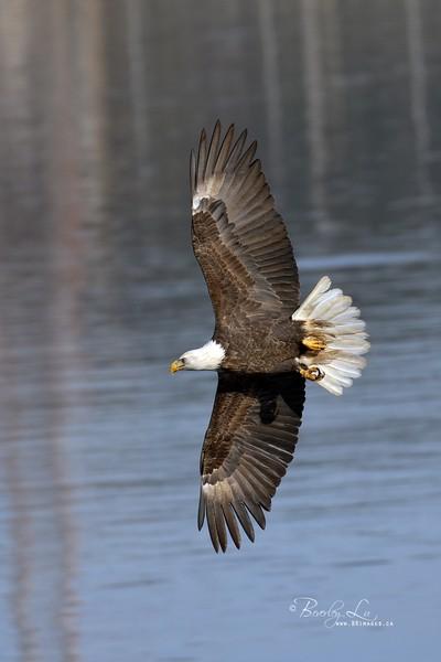 On Wings Wide Open