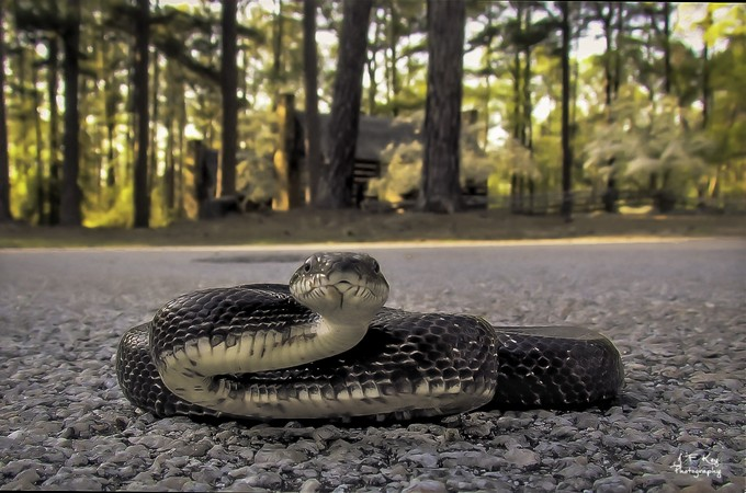 Road Snake by jackfkey - Subjects On The Ground Photo Contest