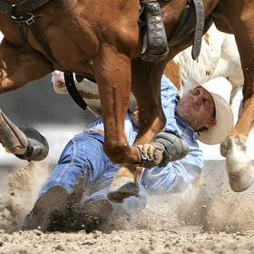 The cowboy has left the saddle of his horse, which is in the foreground, and grabbed the horns of the steer running alongside. At this point the ...