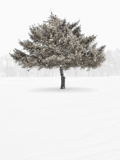 Tree In The Snowstorm