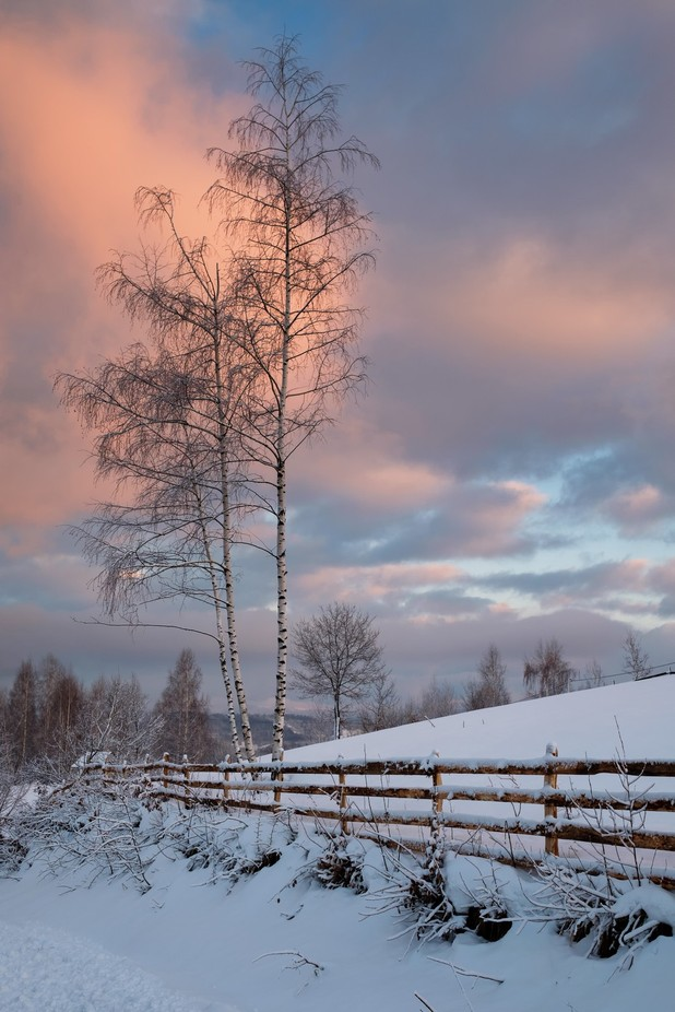 Birch by KemalBecirevic - Image Of The Month Photo Contest Vol 18
