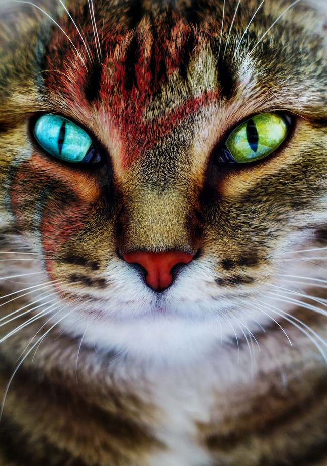 Kitty Stardust by Bastetamon - Feline Beauty Photo Contest