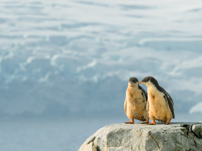 A Pair by suzyfuquea - Celebrating Nature Photo Contest Vol 5