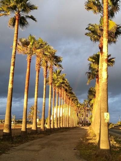Palmtrees in Sundown
