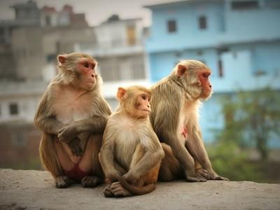 Jaipur onlookers