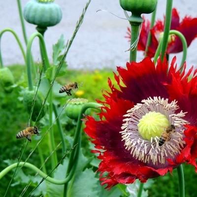Flight of the honey bees