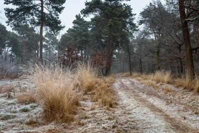 Path Of Grasses