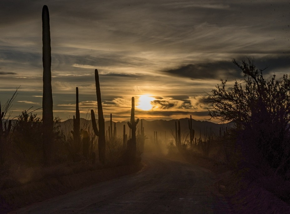 January, 2017, Sunset at Saguaro national park.