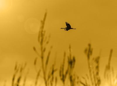 Alone in sky