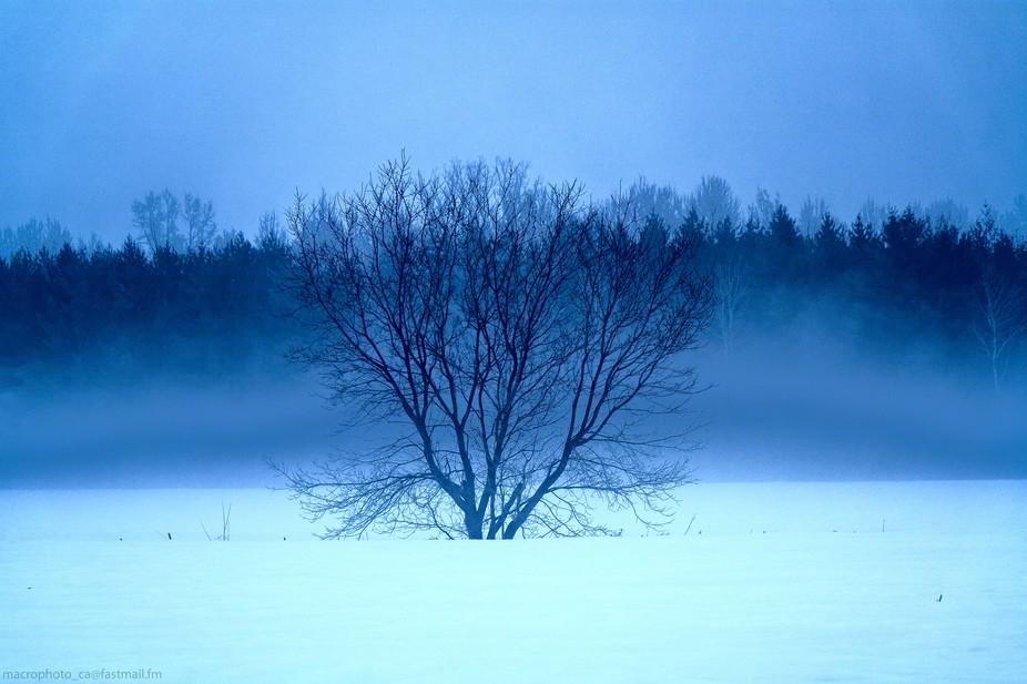 Fog on a mild winter day after a cold snap can lead to wondrous scenes. Taken in a small rural to...