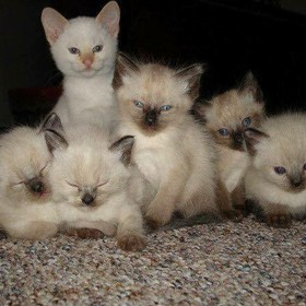Used to breed cats... this was a litter that was particularly photogenic