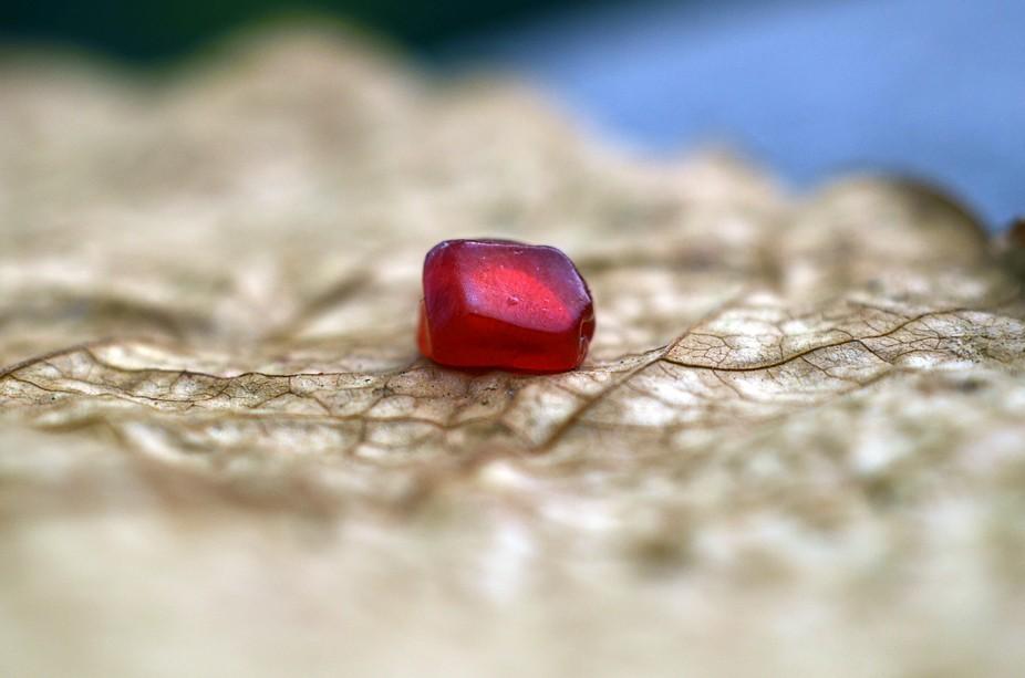A single piece of pomegranate fruit on a dry leaf