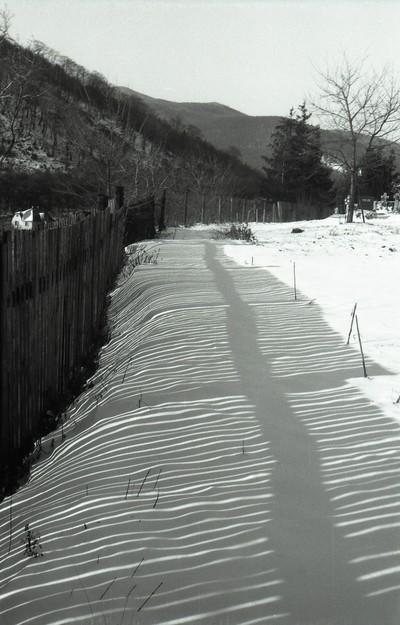 Fence Shadows On The Snow