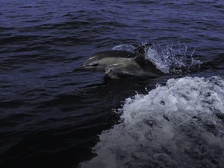 Dolphin Jump-Edit