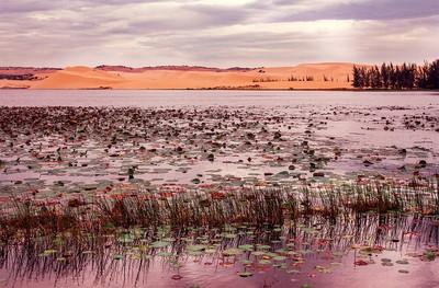 watered_desert