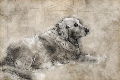 Shelby--Gone but Not Forgotten