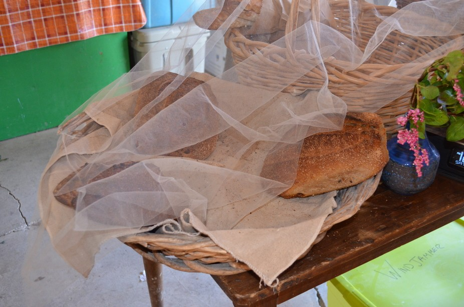 Found this wonderful organic bread at the farm.