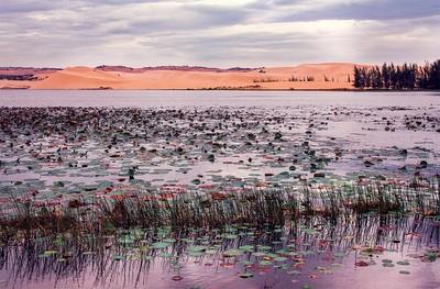 watered desert