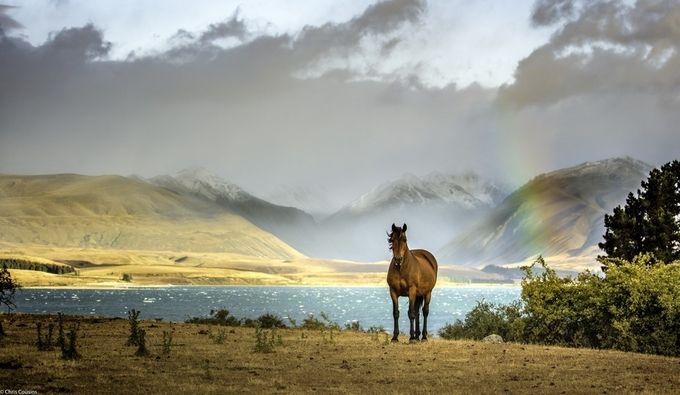 NZ 2017 January - Lake Tekapo Horse by chriscousins - Celebrating Nature Photo Contest Vol 3