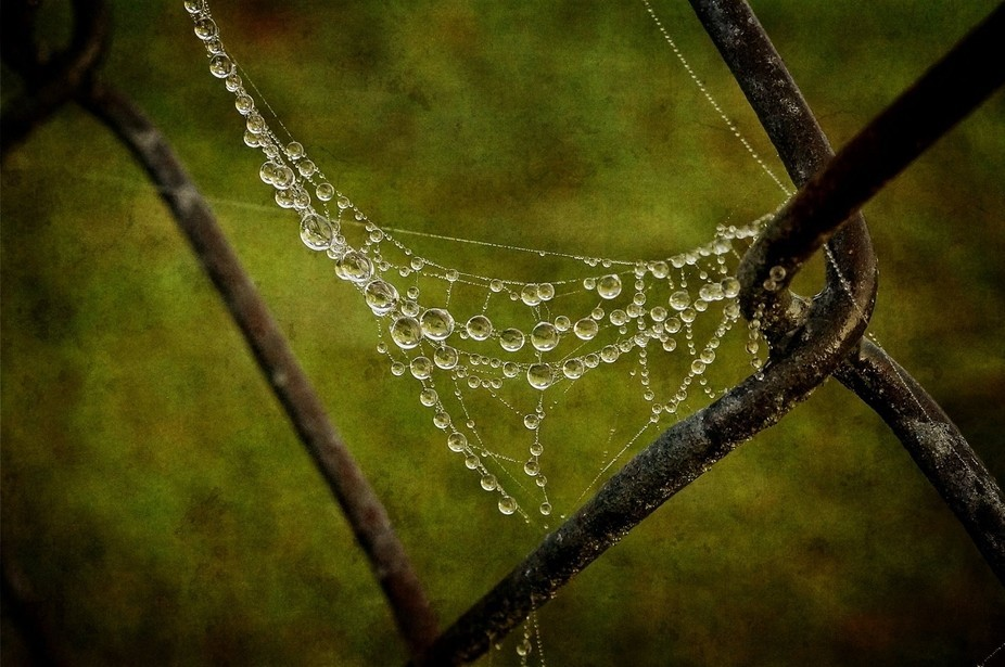 Dewdrops and spiderwebs enhance the fence with a one of a kind necklace.