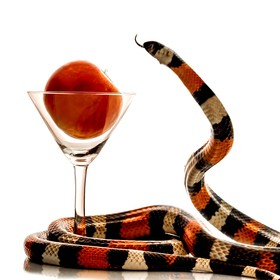My beautiful pet snake Marzella))) Who Wants to Be a Godparent?)))