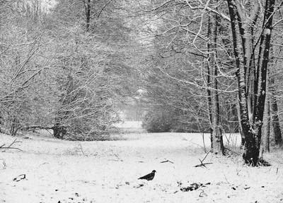 Ganzenhoef in Snow