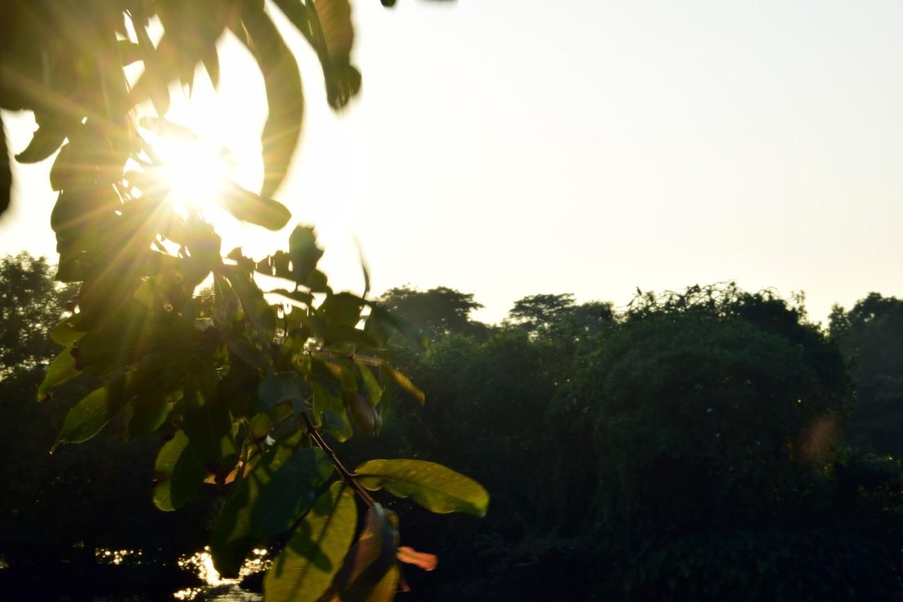 Golden rays of sun during sunset