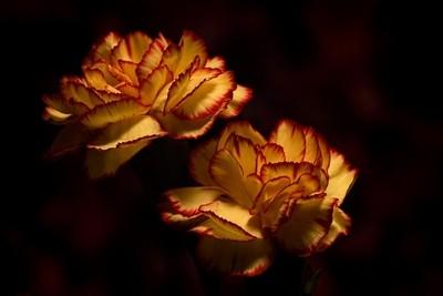 Small Carnation Pair 0119