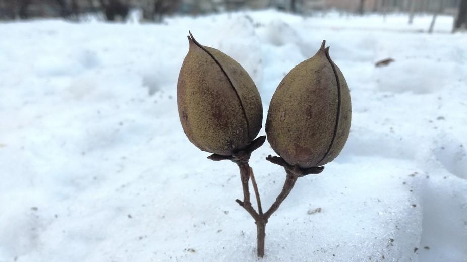 Winter frozen shell