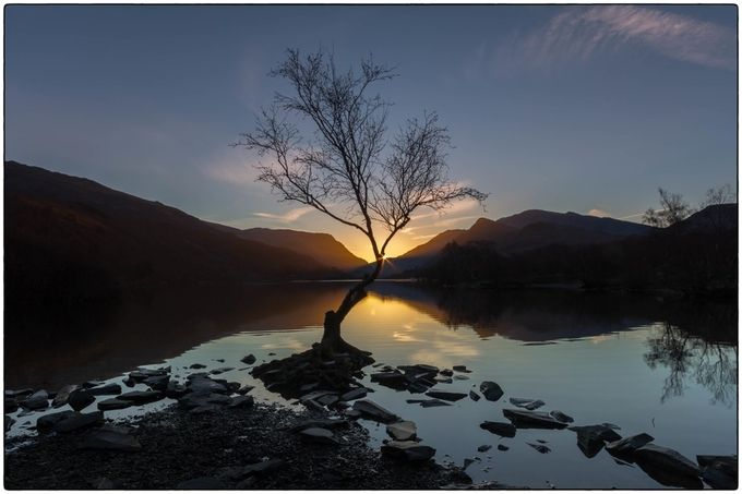 Lonely Tree at Sunrise by jaybirmingham - A Lonely Tree Photo Contest