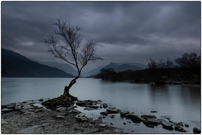 Lonely Tree On A Moody Morning