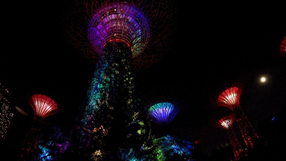 I was laying down on the ground staring up at the Super Trees in the Gardens by the Bay at Marina...