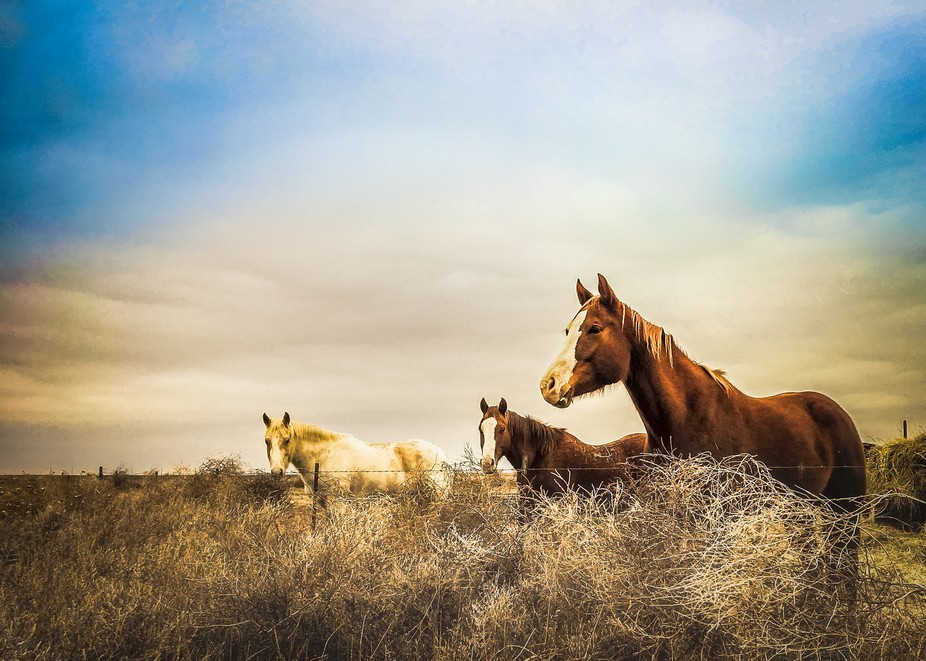 Odd Horse Out