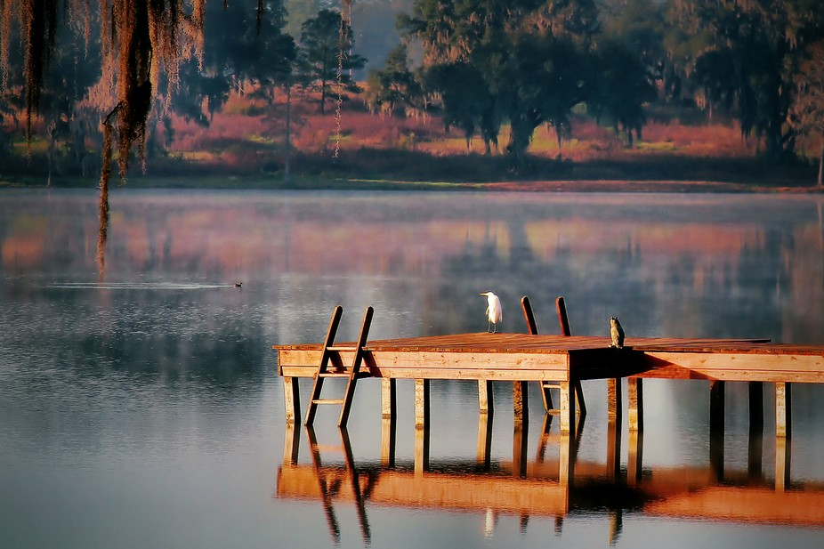 Early morning life begins for all creatures on a Southern lake.