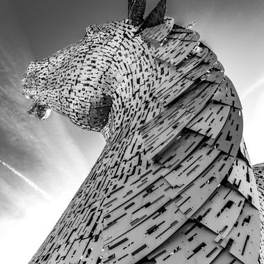 Kelpies in Black and White