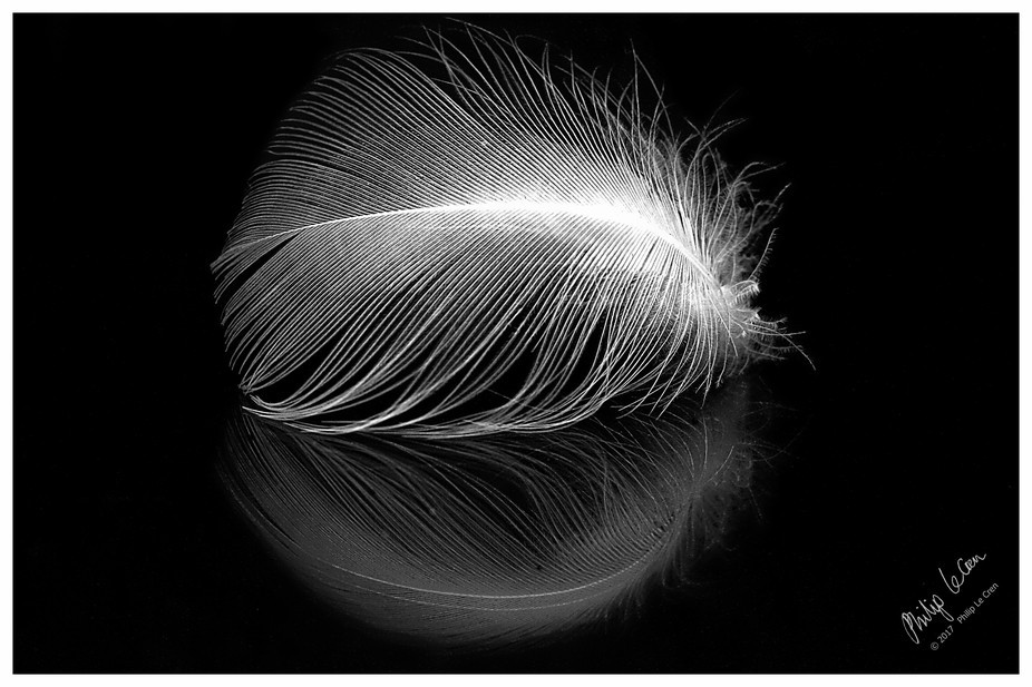 Seagull Feather And Reflection (Signature) - At Home, Woolston, Christchurch, New Zealand