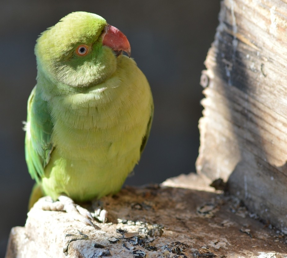 My green Bird