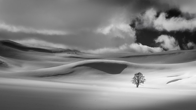 Vast extremes by timboten - A Lonely Tree Photo Contest