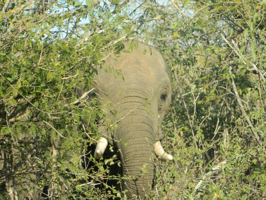 I just love this photo of a junior elephant peeking at me.