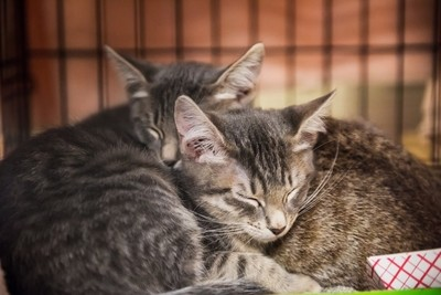 Two kittens cuddling and sleeping