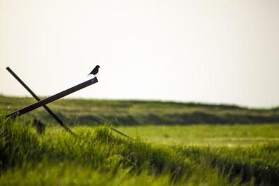 Bird in grassland