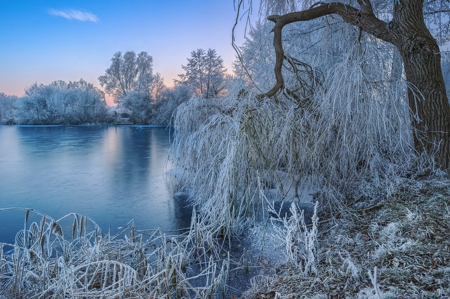 Frozen lake and hoarfrost. Photographed at Lake Thielenburger in Dannenberg (Lower Saxony, German...
