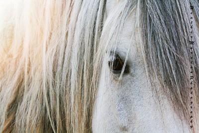 Little Grey mare