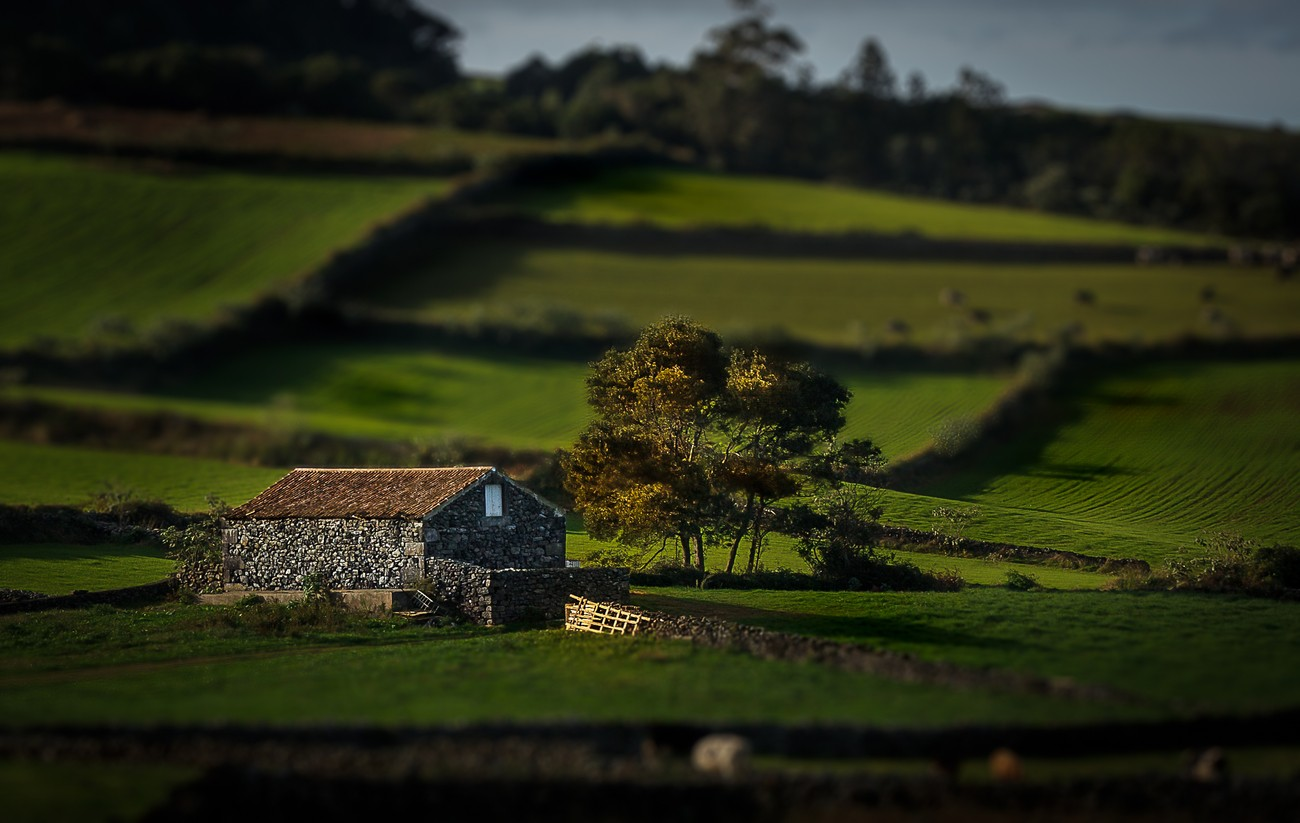 Tiltshift Effect Photo Contest Winner